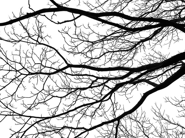 tree-1438260_640
