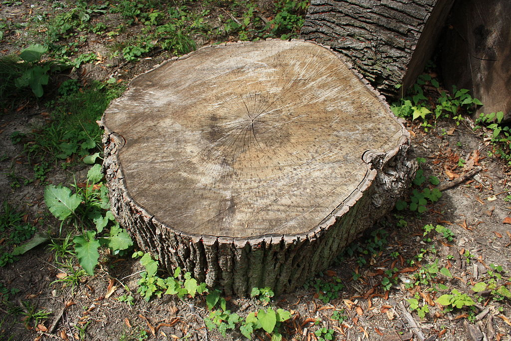 There are many Reasons You Should Leave that Tree Stump to a Specialist